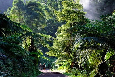 Two men walking along the exotic forest of Caldeira Velha, near Ribeira Grande. São Miguel, Azores islands, Portugal