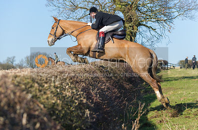 The Cottesmore Hunt at Home Farm, Brooke 19/2