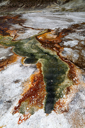 Hot spring outlet and colourful algae, Puchuldiza geyser field, Region I, Chile