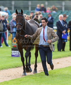 Ben Way and GALLEY LIGHT at the trot up, Land Rover Burghley Horse Trials 2018