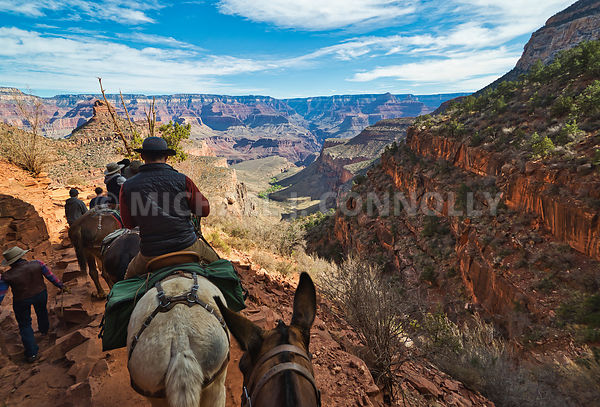 Beginning Mule Ride To Phantom Ranch- Grand Canyon