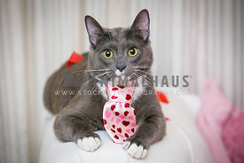 gray cat in a pink tie