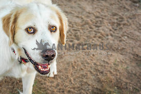 smiling dog in dirt