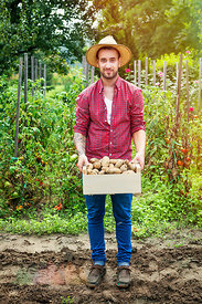 Young man harvesting potatoes in vegetable garden