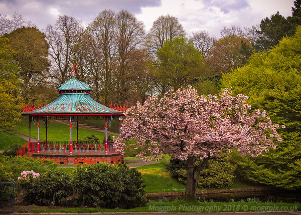 The Bandstand Blossom