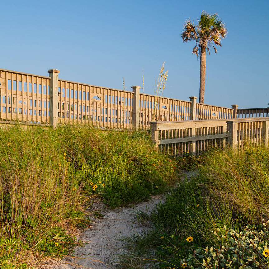 Dune Path with Palm