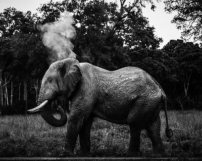 00559-Elephant_Laurent_Baheux