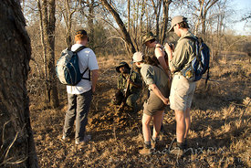 Game rangers guiding showing tourists spoor on ground