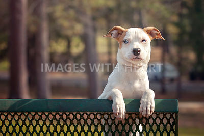 Puppy on park bench looking at camera