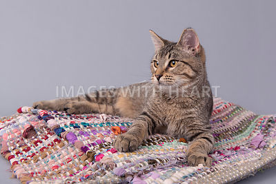 Cat lying on rug looking away from camera