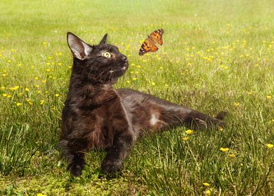 Black Cat in Flower Field With Butterfly