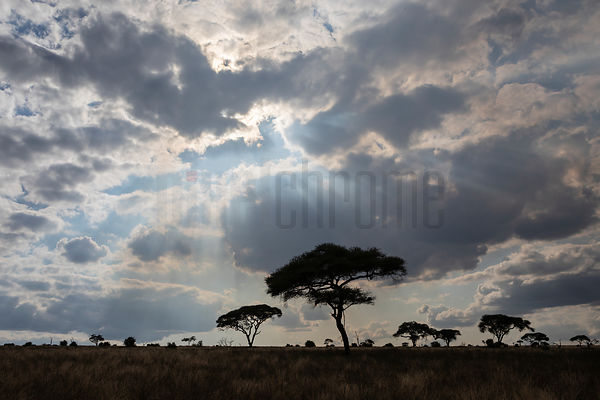 Afternoon Sky in Tarangire