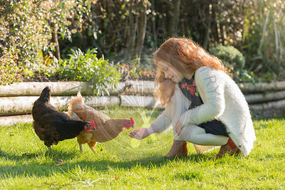 A little girl in her garden, feeding her chickens.