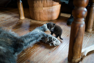 Dog behaviourist Kati Rättö also has cats in her home.