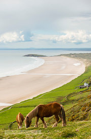 Horses at Rhossili Bay - BP3602