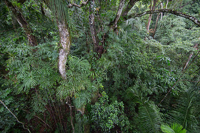 Tropical rainforest, Barro Colorado Island, Gatun Lake, Panama Canal, Panama.