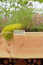 pearlwort, Digital, Grasses, Green roof, Thrift