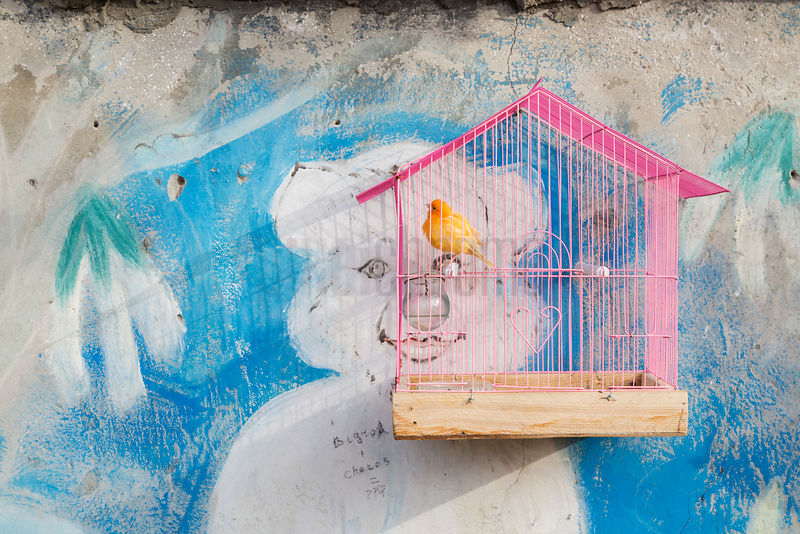 Canary in a Pink Cage at the Sunday Bird Market in Bukhara
