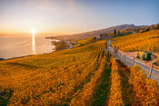 Golden Vineyards sunset - Lavaux | Autum