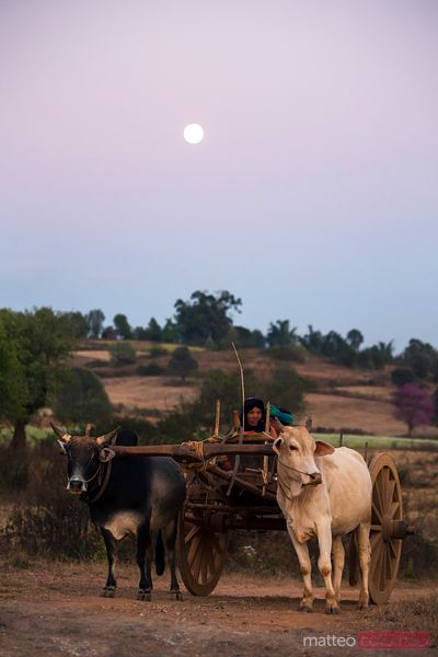 Bullock cart with local people under a full moon, Burma