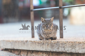 French cat in village square
