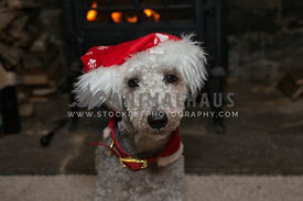 small dog sitting by fireside wearing santa hat