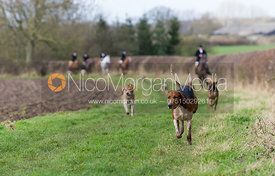 Horse & Hound - The Atherstone Hunt meet at The Kennels, Atherstone, Thursday 31st January 2013.