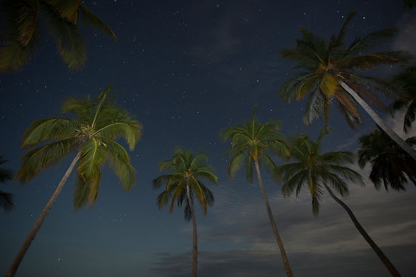 Starry night sky and palms