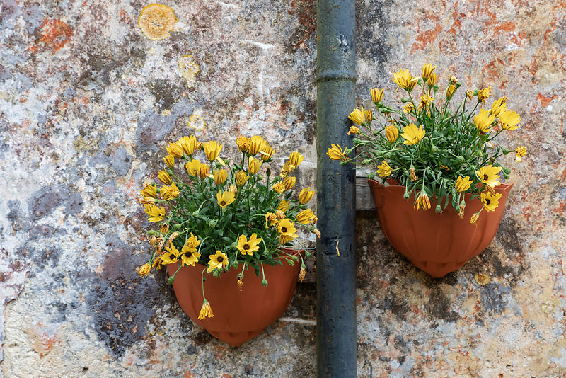 Potted Plants Hanging on a Lichen-covered wall at Erice