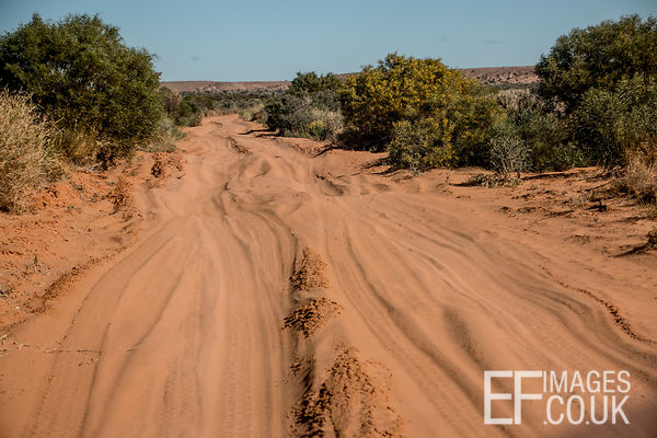 Questionable Road Conditions In The Simpson Desert