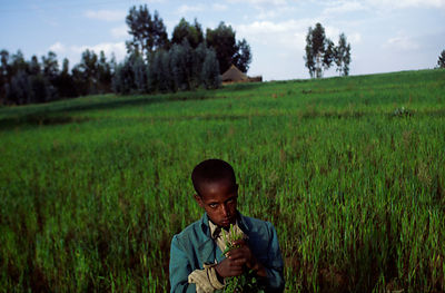 Ethiopian child in a field of crops