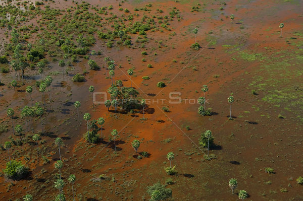 "Aerial view of the floodplain of the Beni, with waters full of red algae, and ""Caranday"" palm trees (Copernicia alba), Southe..."