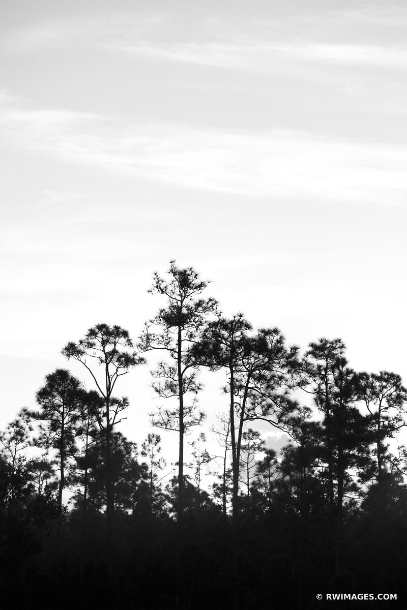 PINELANDS EVERGLADES NATIONAL PARK FLORIDA BLACK AND WHITE