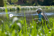 Fly fisherman and swan on River Test, Hampshire, England