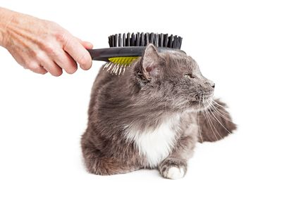 Cat Being Groomed With Brush