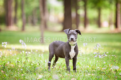 Puppy standing in grass & flowers at park looking at camera