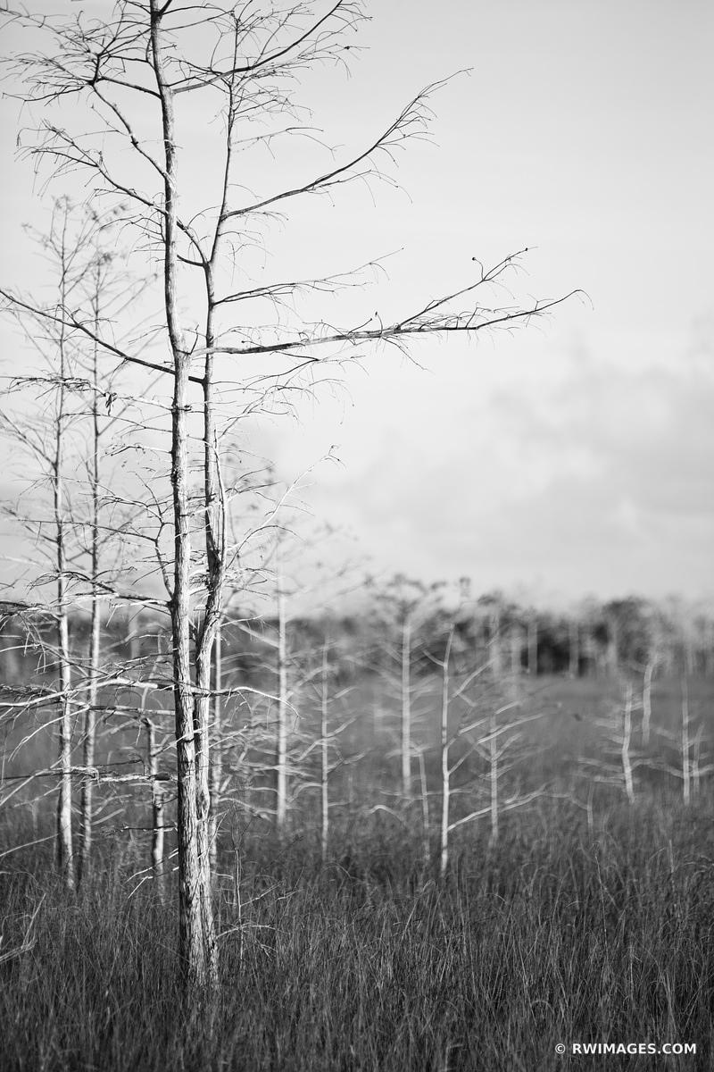 DWARF CYPRESS EVERGLADES NATIONAL PARK FLORIDA BLACK AND WHITE