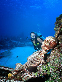 Mexico, Cozumel, Underwater, woman diver with skeleton on airplane wreck in front of La Ceiba Hotel