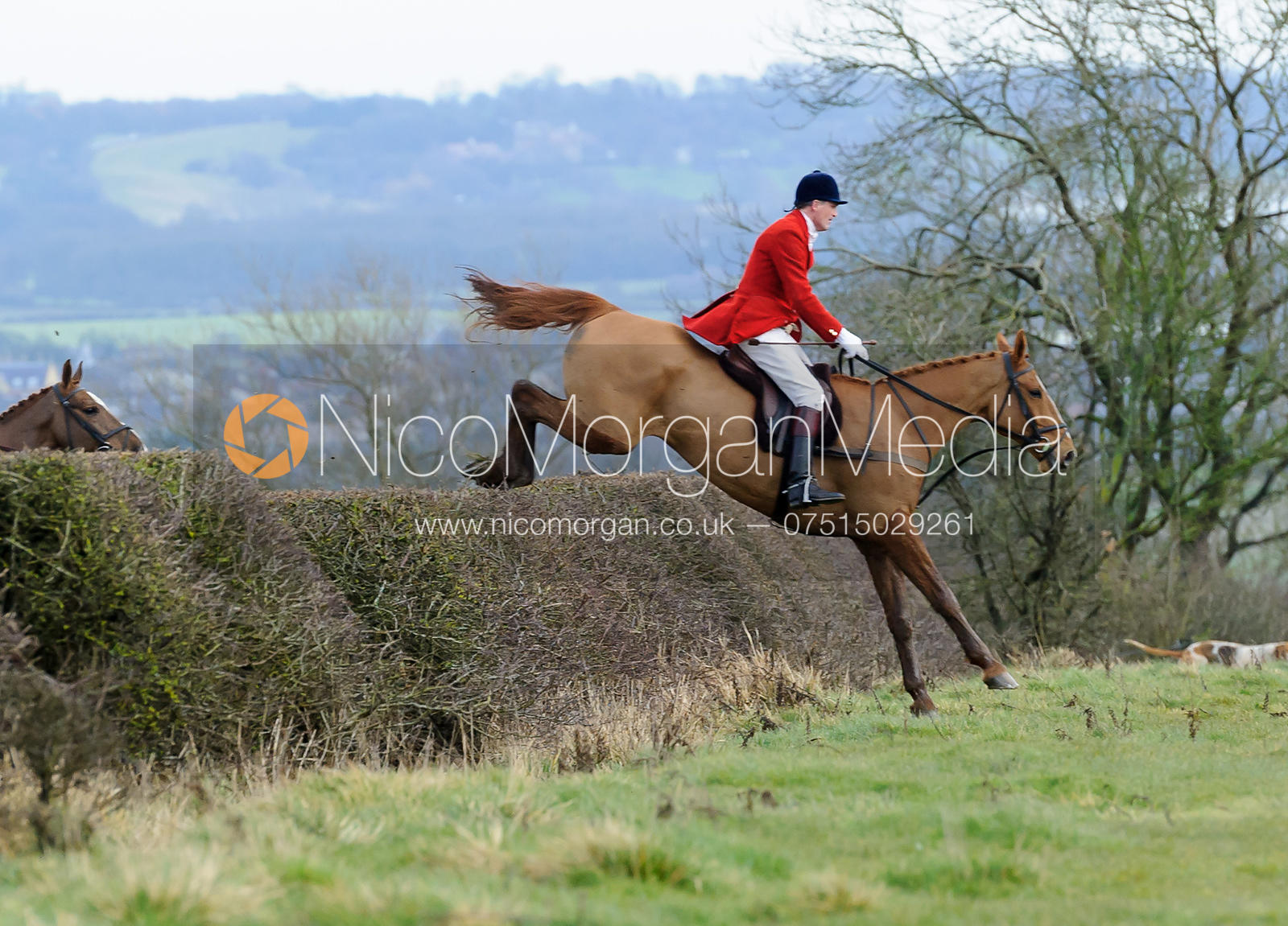 Ashley Bealby jumping a hedge above Wilson's covert