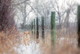 Young dog on a snow path next to fence