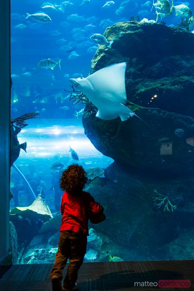 United Arab Emirates, Dubai. Aquarium inside Dubai Mall