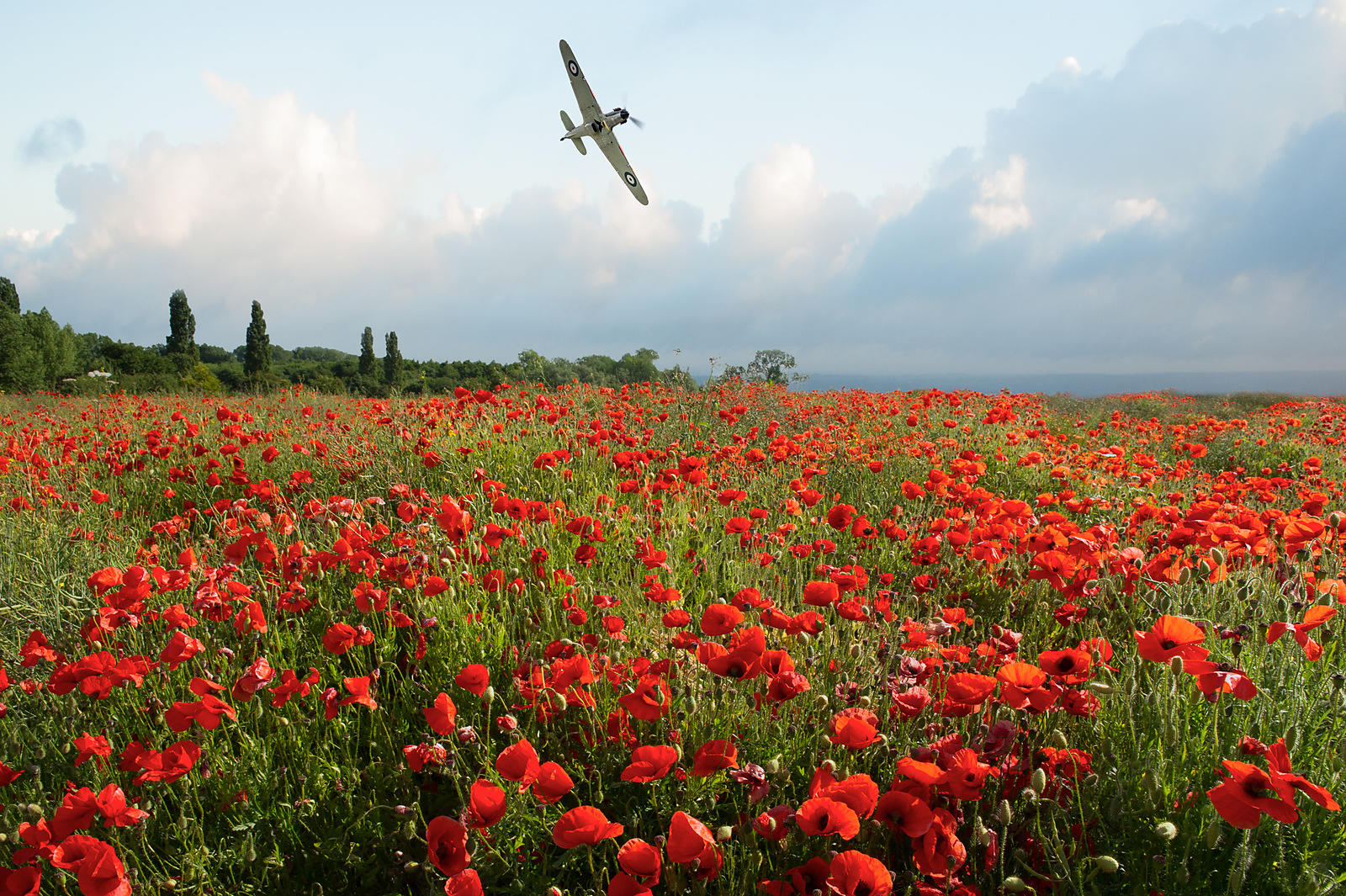 Hurricane over poppy field