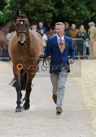 Clark Montgomery and LOUGHAN GLEN - First Horse Inspection, Mitsubishi Motors Badminton Horse Trials 2014