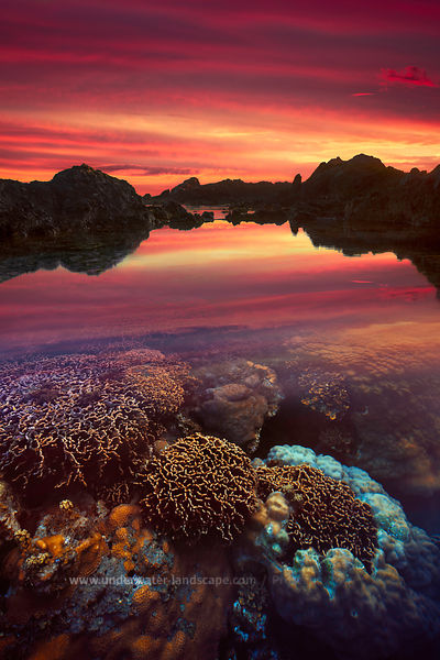 Coral garden at sunset time