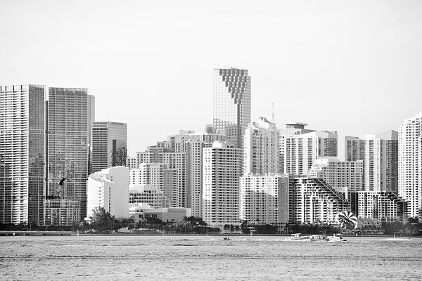 MIAMI SKYLINE BLACK AND WHITE