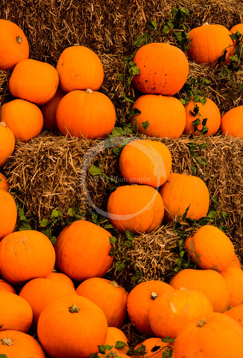 Tumbling Pumpkins