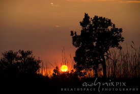 Highveld sunrise. Trees and veld grasses silhouetted against a low orange rising sun.