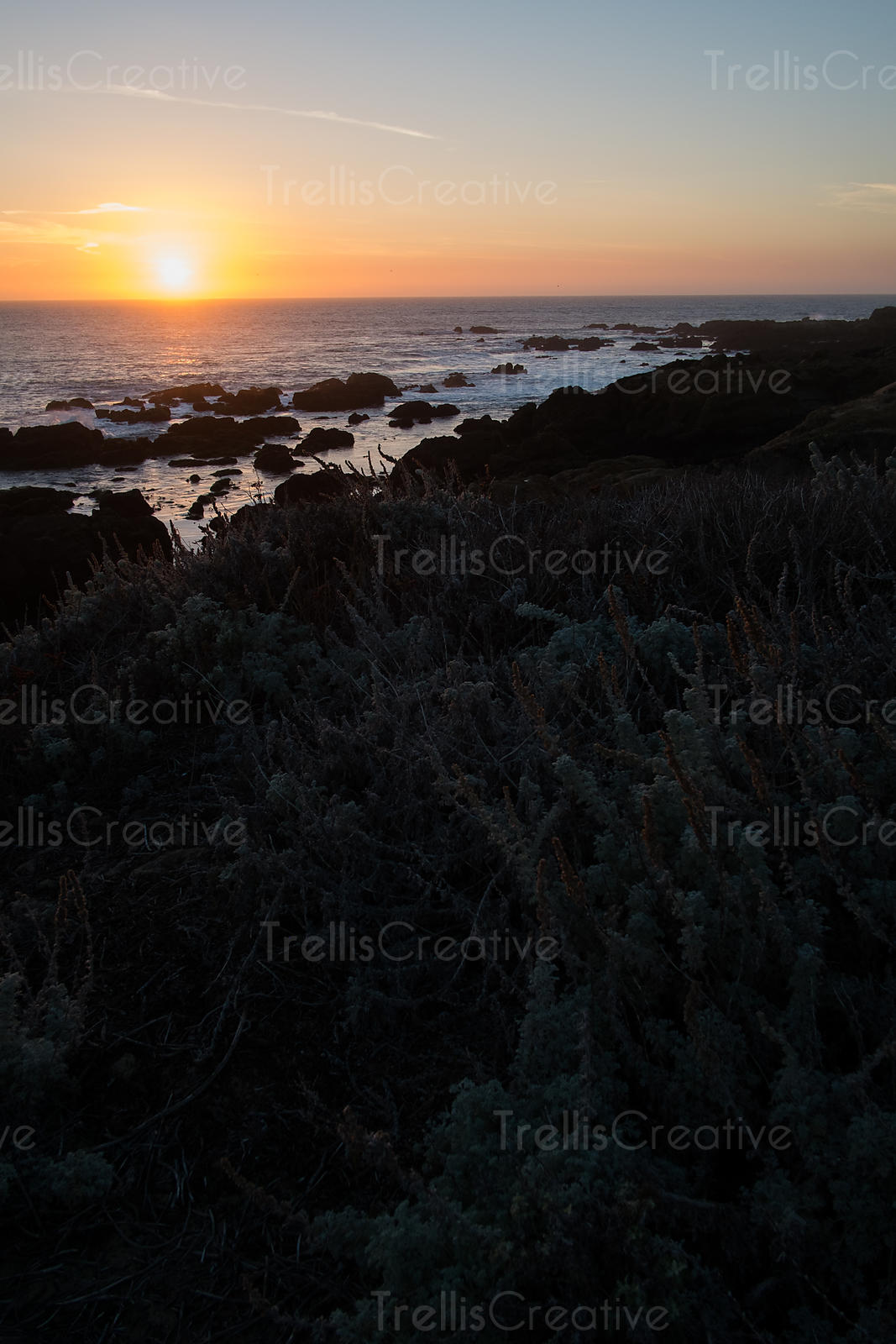 The setting sun on the rocky shores with beautiful coastal flora silouette