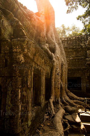 Tree growing on an old ruin at Ta Prohm Temple