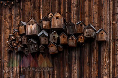 Different wooden birdhouses hanging on wooden wall